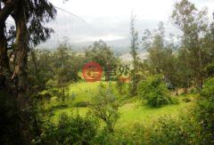 厄瓜多尔因巴布拉省Otavalo的,No name,编号28123982