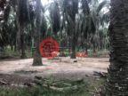 印尼North SumatraMedan的工业地产,Medan ,编号51299395