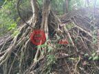 泰国清迈府美登的土地,Mae Thalai,编号57643013
